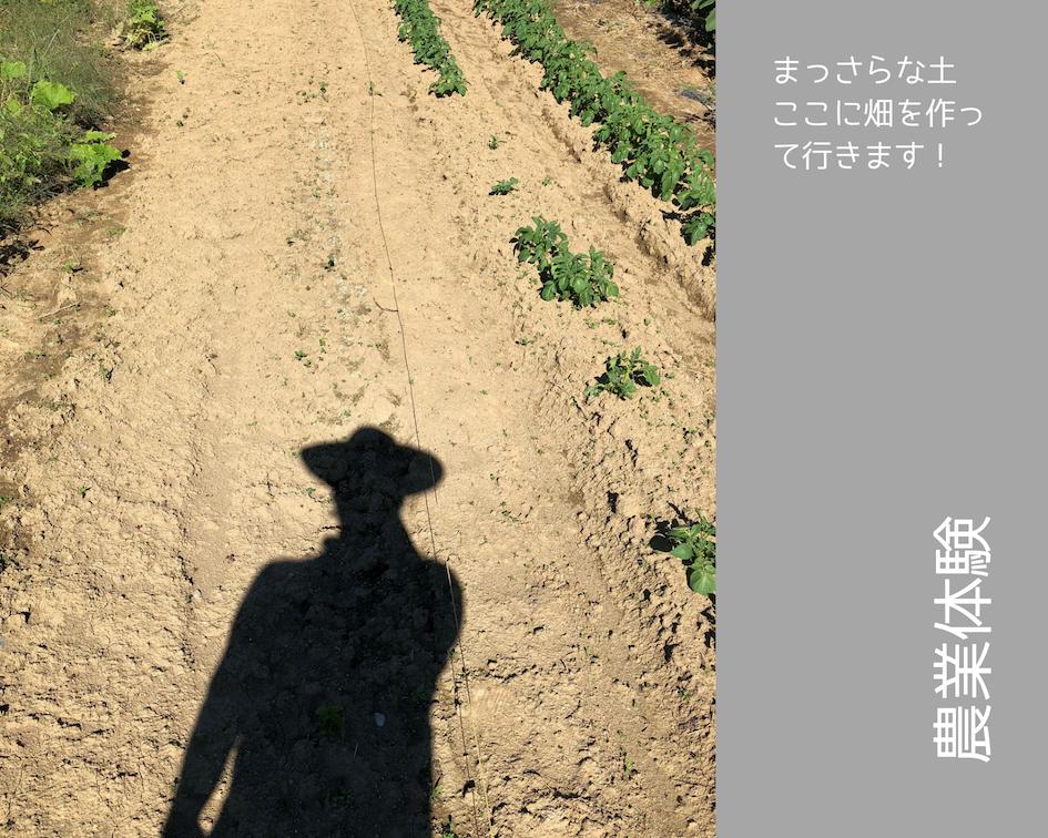 農業体験 vol2 白菜苗植え 02