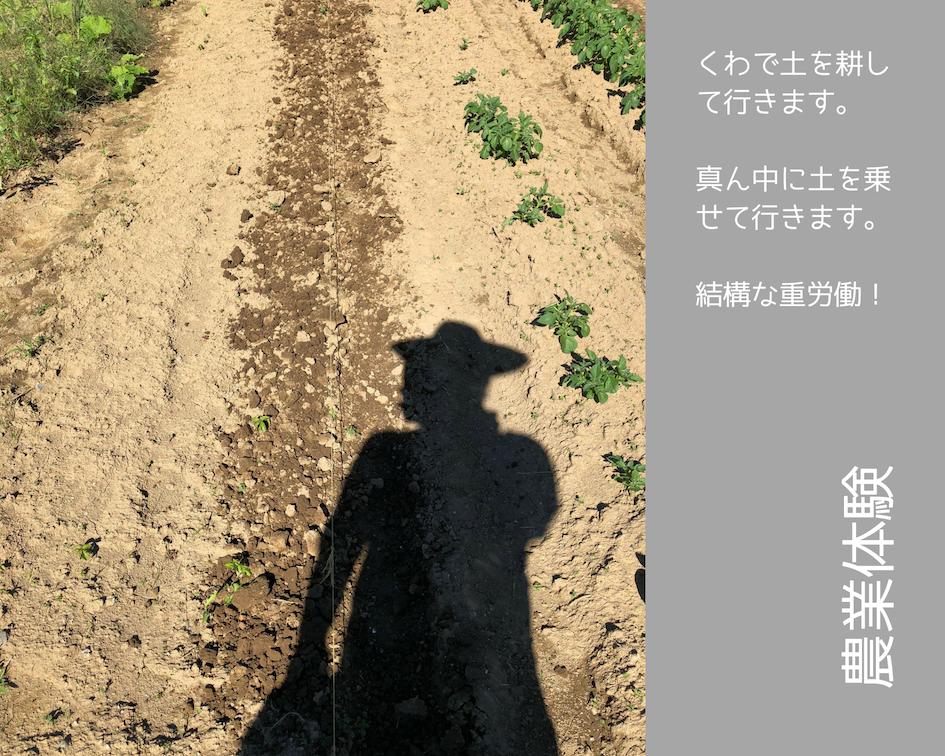 農業体験 vol2 白菜苗植え 03