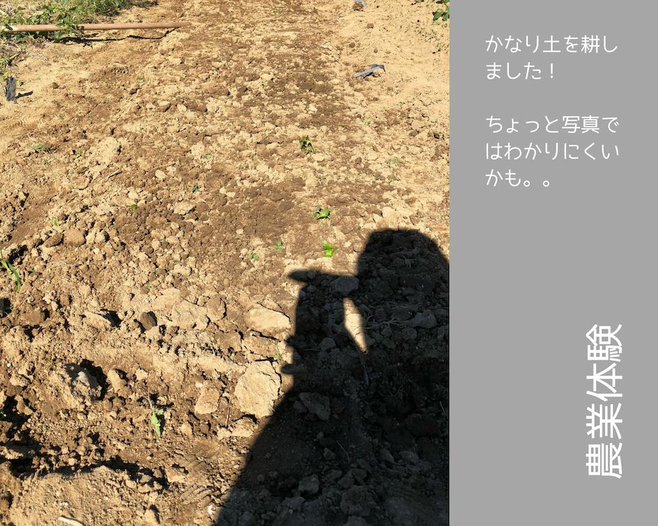 農業体験 vol2 白菜苗植え 04