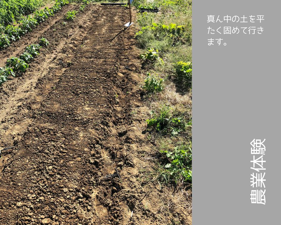 農業体験 vol2 白菜苗植え 05