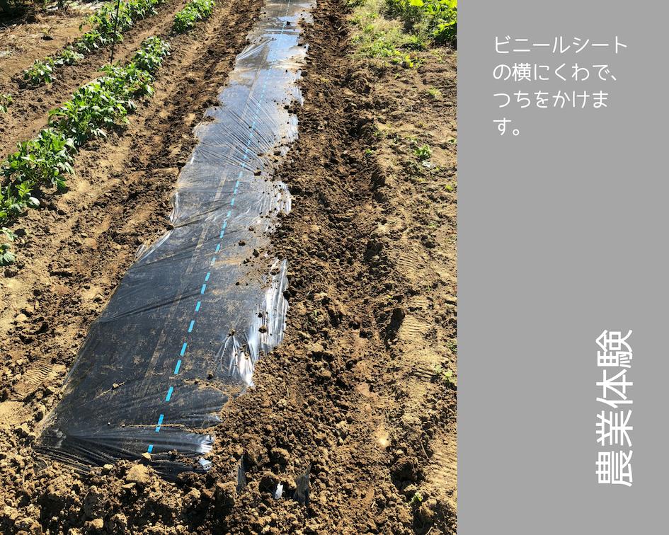 農業体験 vol2 白菜苗植え 07