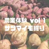 農業体験 vol1さつまいも掘り