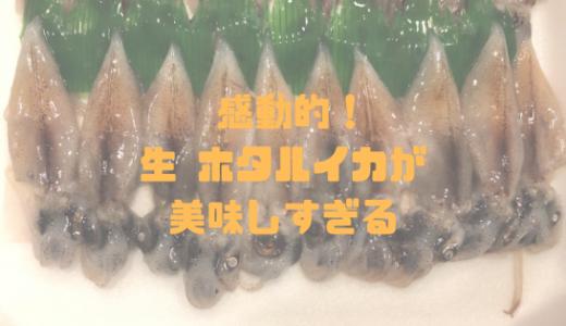 生のホタルイカ(刺身)が美味しすぎてビックリ!意外と安い!お取り寄せしてみた!